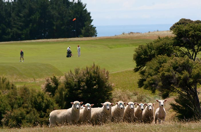 Cape Kidnappers Working Farm