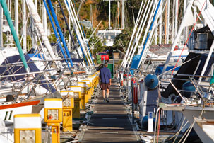 Gulf Harbour Marina Contact